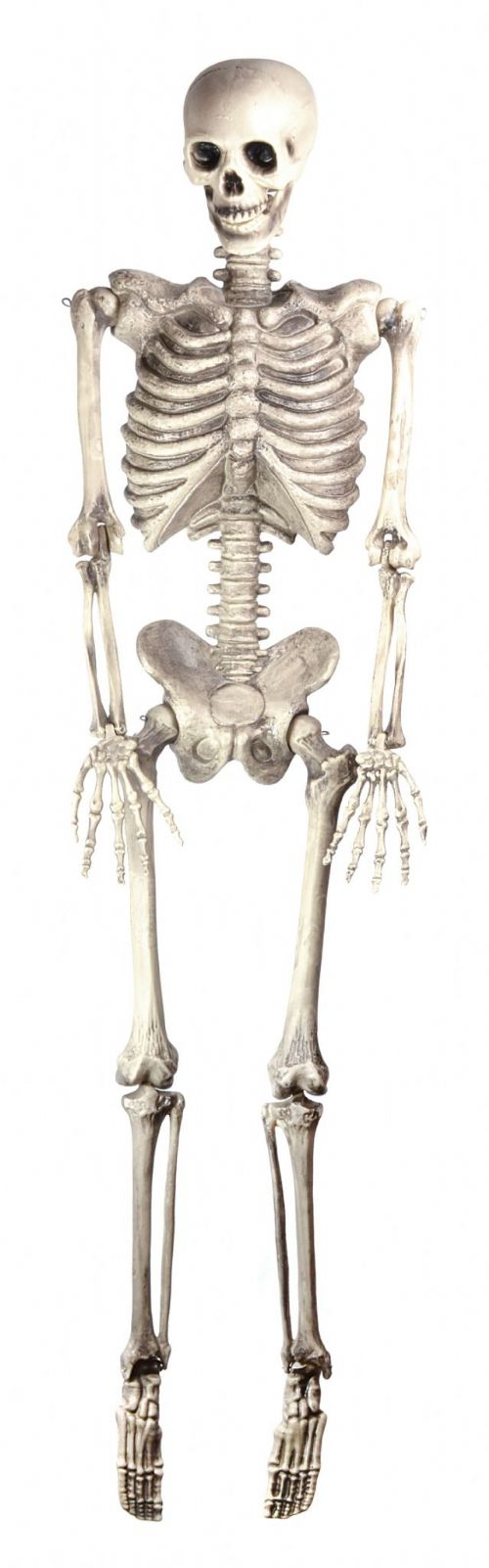 "Halloween Skeleton 60"" Hanging Trick Or Treat Party Decoration"